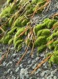 Musgo en piedra Fotografía de archivo