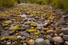 Musgo en piedras del río en el cauce del río seco Imágenes de archivo libres de regalías