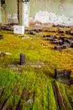 Musgo en piso Imagenes de archivo
