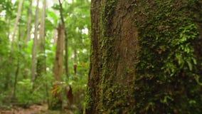 Musgo en rama del ` s del árbol almacen de video