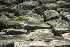 Musgo en roca Fotos de archivo