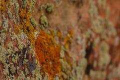 Musgo en roca Imágenes de archivo libres de regalías