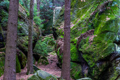 Musgo en rocas de la piedra arenisca en el bosque Imagen de archivo libre de regalías