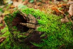 Musgo en tronco de árbol imágenes de archivo libres de regalías