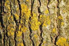 Musgo en un árbol fotografía de archivo