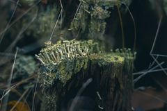Musgo en un tocón en el bosque del otoño Foto de archivo libre de regalías