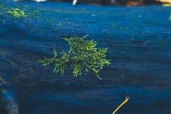 Musgo en un tocón en el bosque del otoño Fotos de archivo libres de regalías