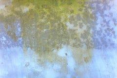 Musgo en una pared azul Imagenes de archivo