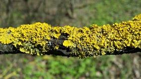 Musgo en una rama de árbol Imagen de archivo libre de regalías