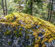 Musgo en una roca Imagenes de archivo