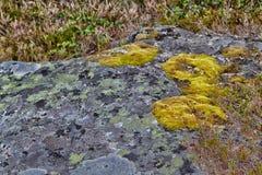 Musgo en una roca Imagen de archivo