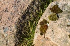Musgo en una roca de piedra Fotos de archivo