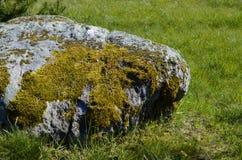 Musgo en una roca de piedra Fotos de archivo libres de regalías