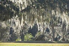 Musgo espanhol em jardins do leu, Orlando, Florida Fotografia de Stock