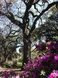 Musgo espanhol no parque de Forsyth em Savannah Georgia fotografia de stock royalty free