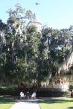 Musgo espanhol que pendura da árvore Fotografia de Stock Royalty Free