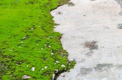 Musgo-fondo verde Imagenes de archivo