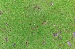Musgo-fondo verde Foto de archivo