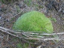 Musgo, grama, madeira Fotos de Stock