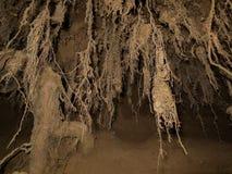 Musgo hacia fuera colgante lavado de las raíces Fotografía de archivo libre de regalías
