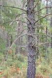 Musgo hermoso en un árbol Foto de archivo