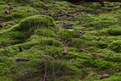 Musgo inferior del bosque Imagen de archivo libre de regalías