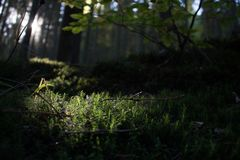 Musgo macro pequeno da floresta Imagem de Stock Royalty Free