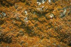 Musgo marrom velho na textura de pedra imagens de stock