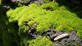 musgo molhado Fotografia de Stock Royalty Free