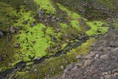 Musgo muy verde Foto de archivo libre de regalías