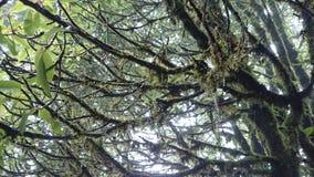 Musgo na árvore Foto de Stock Royalty Free