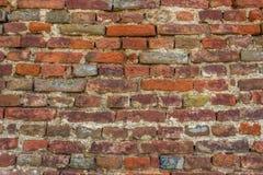 Musgo na parede do almofariz dos tijolos vermelhos Imagem de Stock Royalty Free
