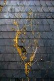 Musgo na parede preta da telha Fotografia de Stock