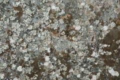 Musgo na pedra Imagens de Stock Royalty Free