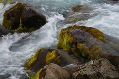 Musgo na pedra Fotografia de Stock