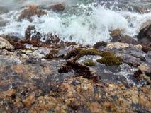 Musgo na pedra coberta com o gelo foto de stock