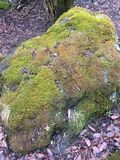Musgo na rocha Foto de Stock