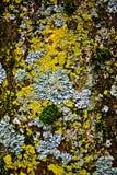 Musgo na superfície da árvore Foto de Stock Royalty Free