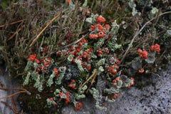 Musgo na superfície de pedra Fotografia de Stock Royalty Free