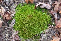 Musgo na terra em uma área arborizada foto de stock