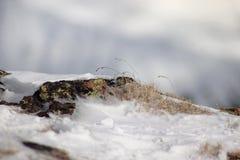 Musgo natural em pedras Textura na natureza imagens de stock