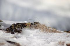 Musgo natural en piedras Textura en naturaleza imagenes de archivo