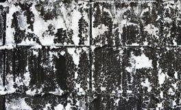 Musgo negro en la cerca concreta, textura Foto de archivo libre de regalías