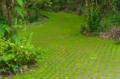 Musgo no jardim. Fotos de Stock
