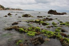 Musgo no mar imagem de stock royalty free