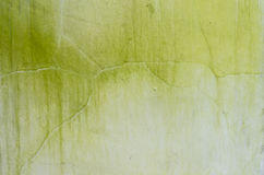 Musgo no muro de cimento Fotografia de Stock Royalty Free