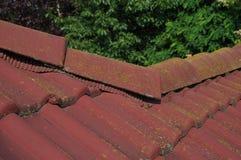 Musgo no telhado Foto de Stock