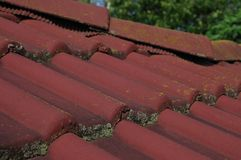 Musgo no telhado Imagem de Stock