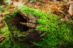 Musgo no tronco de árvore imagens de stock royalty free