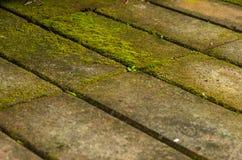 Musgo nos tijolos Imagens de Stock Royalty Free